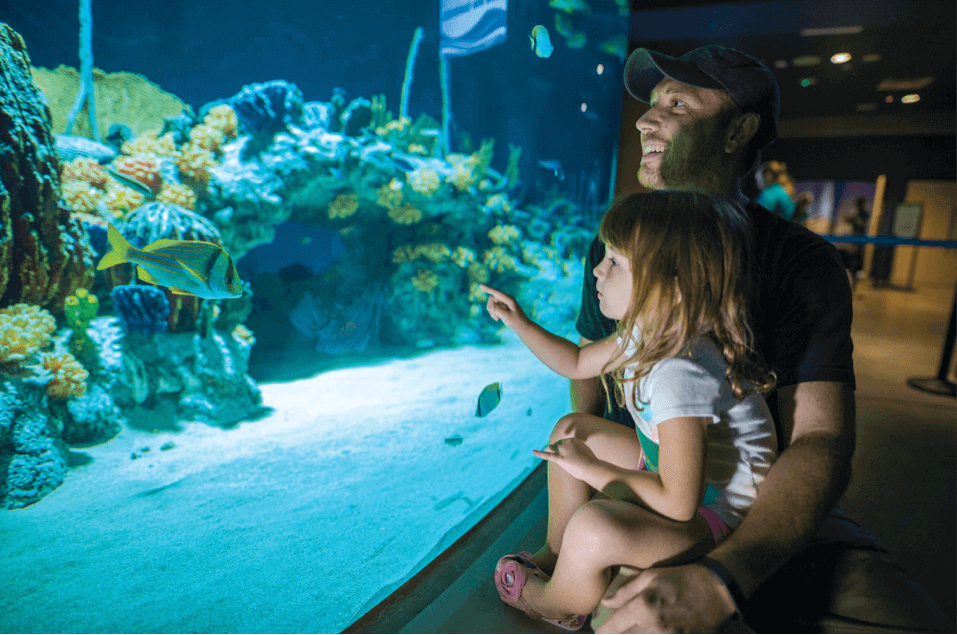 A family enjoying the OdySea aquarium fish